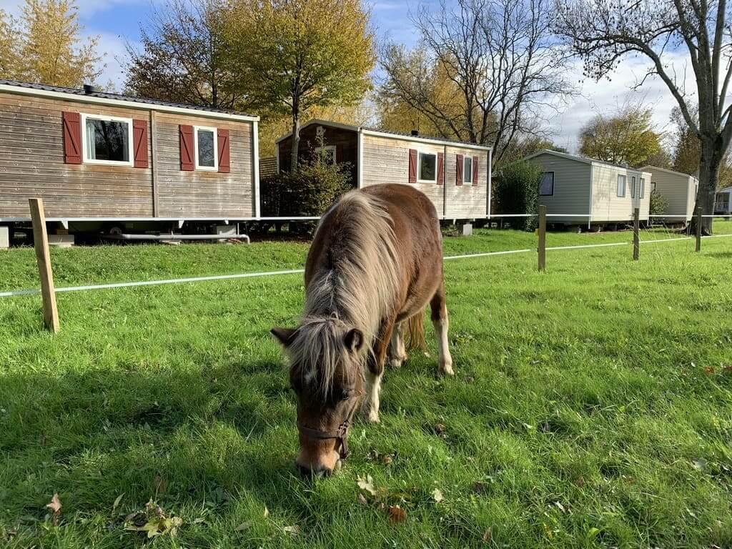 poneys au camping en dordogne